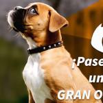 Egresados de UVM Campus San Ángel desarrollan App para cuidado y paseos de perros