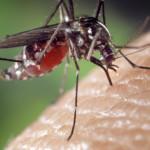 Desarrolla estudiante de UVM repelente natural, para prevenir enfermedades transmitidas por picadura de mosco en comunidades indígenas