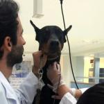 Necesario un banco de sangre para caninos en la ciudad de México