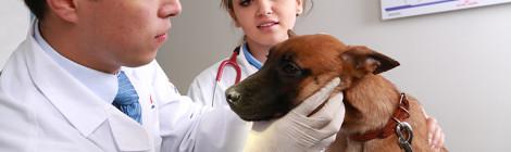 Recomiendan revisiones periódicas para detección temprana de cáncer en perros