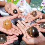 Caracol Manzana Maya, alternativa nutrimental del mexicano: Maritza Morales, Ganadora del Premio UVM por el Desarrollo Social