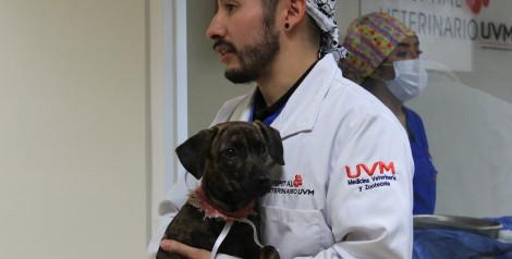 El Hospital Veterinario de UVM lleva a cabo jornada de esterilización de perros afectados por el sismo